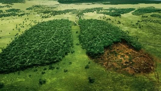 Защита на околната среда